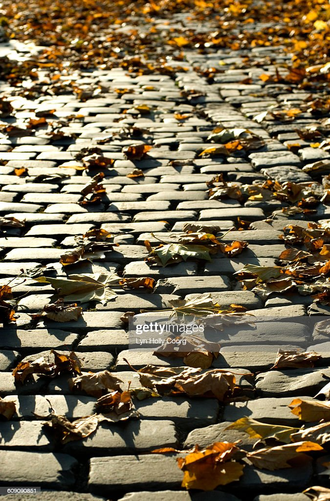 Autumn leaves on cobbled street : Stock Photo