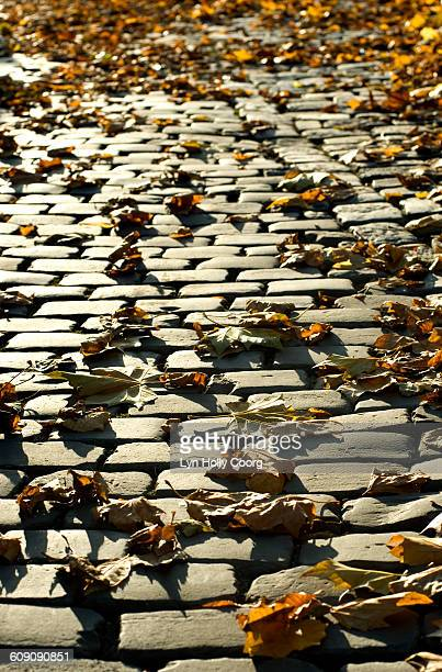 autumn leaves on cobbled street - lyn holly coorg stock photos and pictures