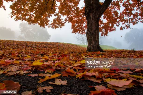 autumn leaves on field against sky - eyeem jeremy walter stock pictures, royalty-free photos & images