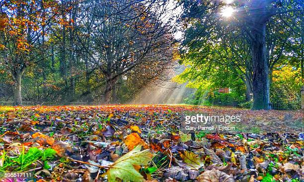 autumn leaves on field in forest - northamptonshire stock pictures, royalty-free photos & images