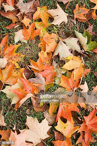 autumn leaves on ground - jessamyn harris stock pictures, royalty-free photos & images