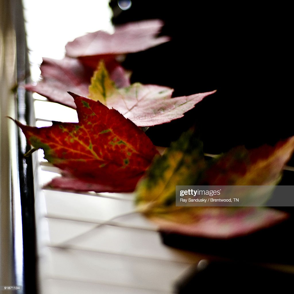 Autumn Leaves On Piano Keyboard Stock Photo - Getty Images