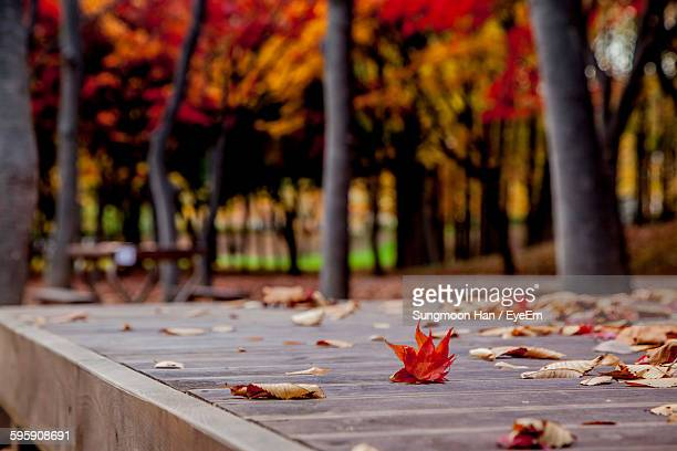 autumn leaves on picnic table at park - picnic table stock pictures, royalty-free photos & images