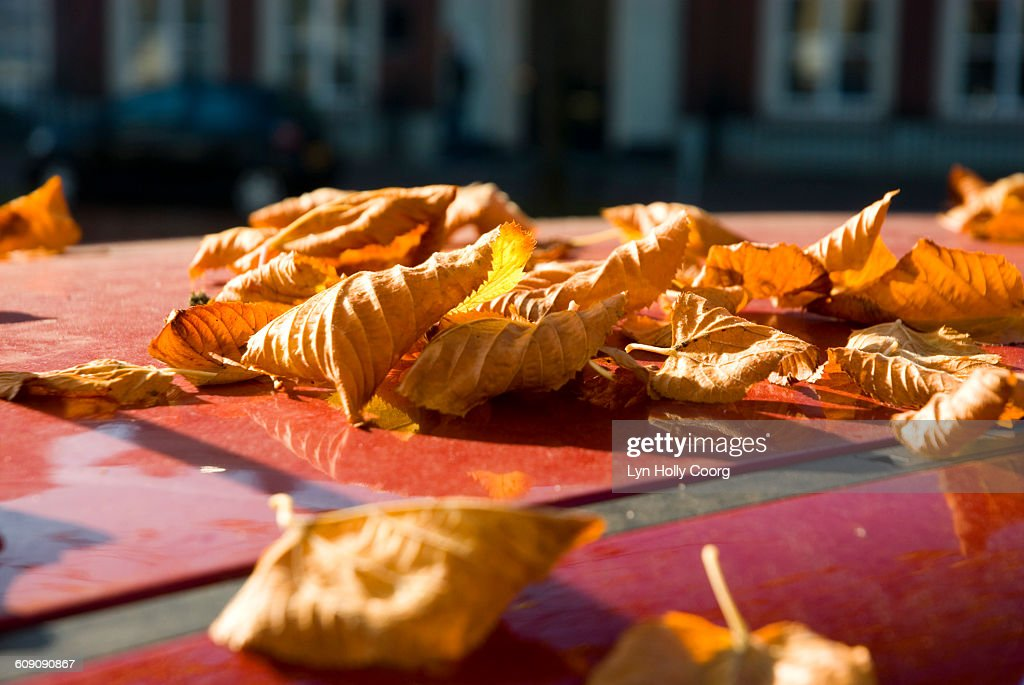 Autumn leaves on red car rooftop : Stock Photo