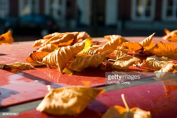 autumn leaves on red car rooftop - lyn holly coorg stock photos and pictures