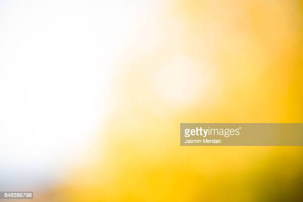 autumn leaves on sun - sunlight stock pictures, royalty-free photos & images