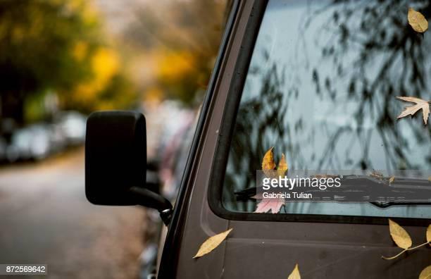 Autumn leaves on the hood of a van