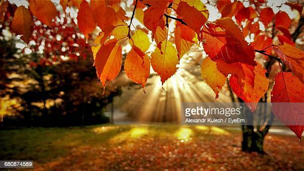 Autumn Leaves On Tree