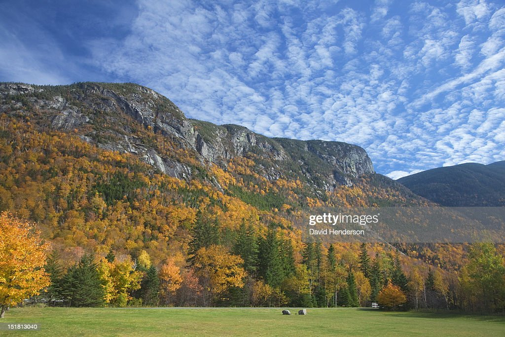 Autumn leaves on trees along mountain : Foto de stock