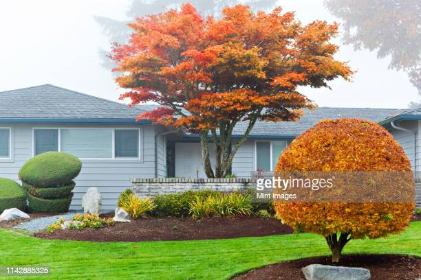 autumn leaves on trees in front of house - landscaped stock pictures, royalty-free photos & images