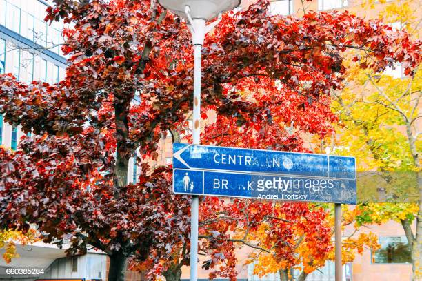 Autumn leaves on trees on streets of Stockholm, Sweden