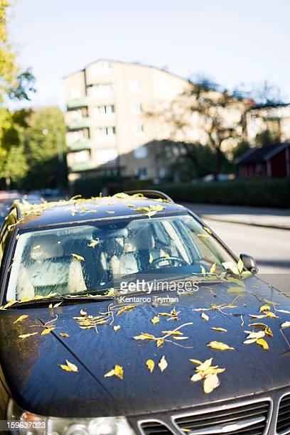 Autumn leaves on wet car