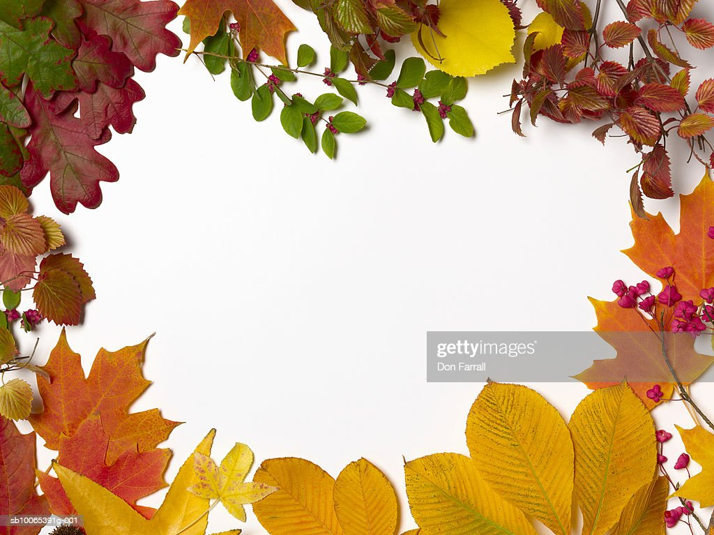 Autumn leaves on white background with empty space in middle : Foto stock