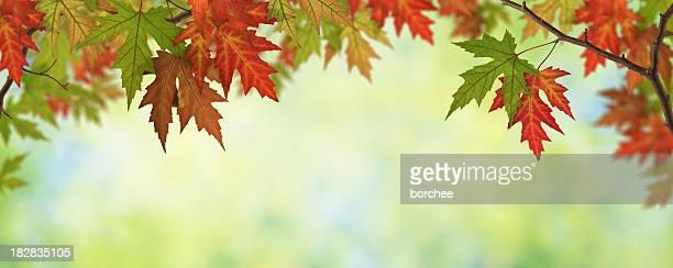 Autumn Leaves Panorama