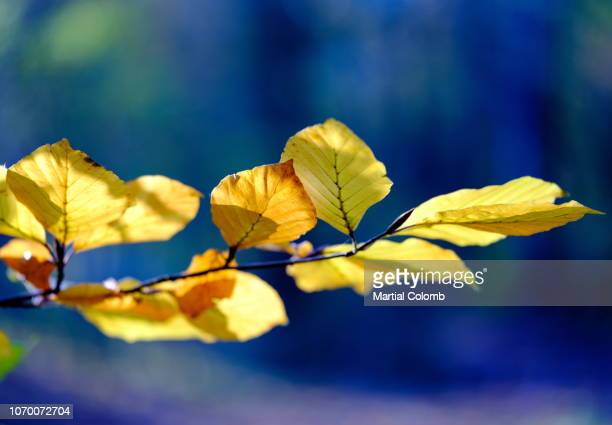 autumn leaves - martial stock pictures, royalty-free photos & images