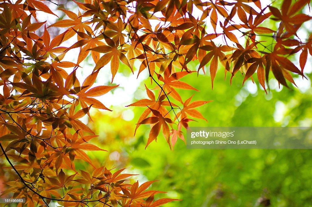 Autumn leaves : Foto stock