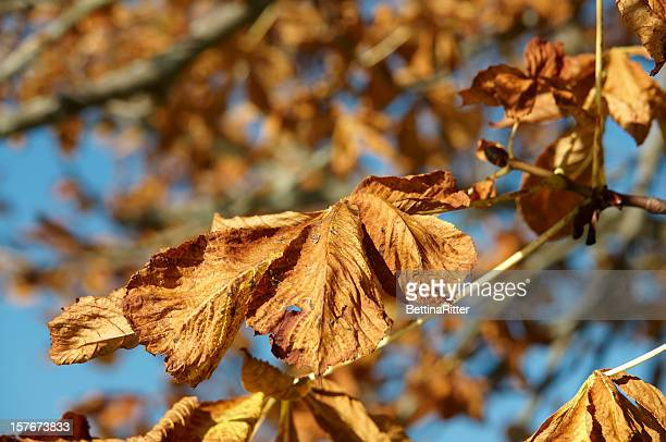 autumn leaves - flaccid stock photos and pictures