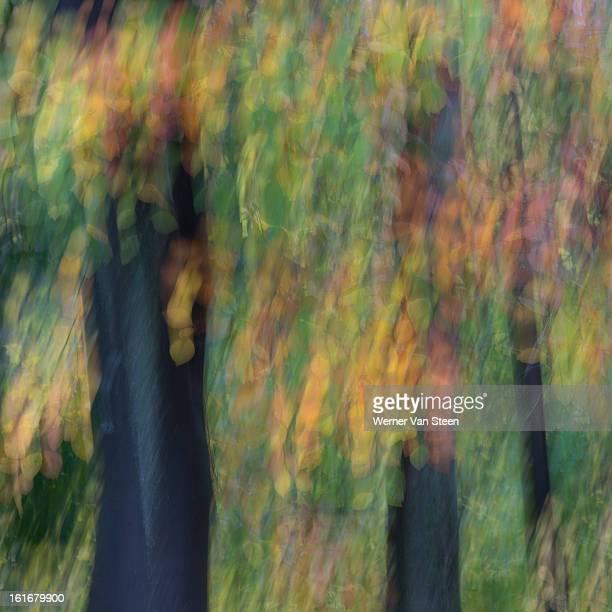 autumn leaves - nature stockfoto's en -beelden