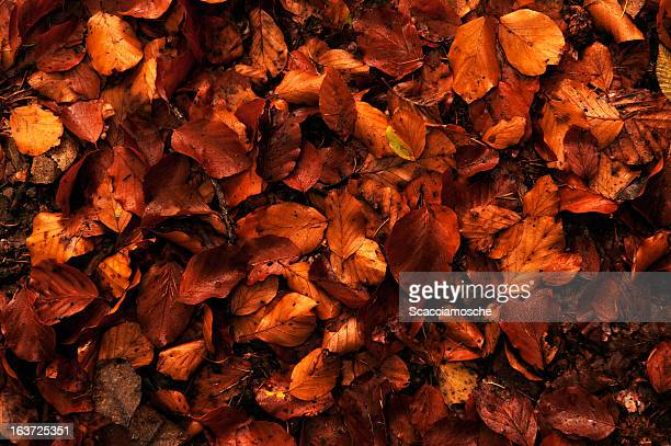 autumn leaves - november background stock photos and pictures