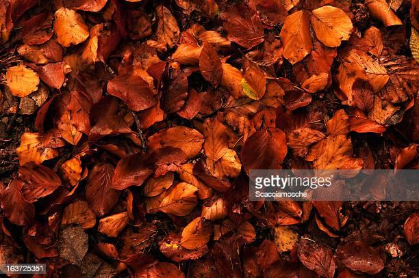 folhas de outono - estampa de folha - fotografias e filmes do acervo