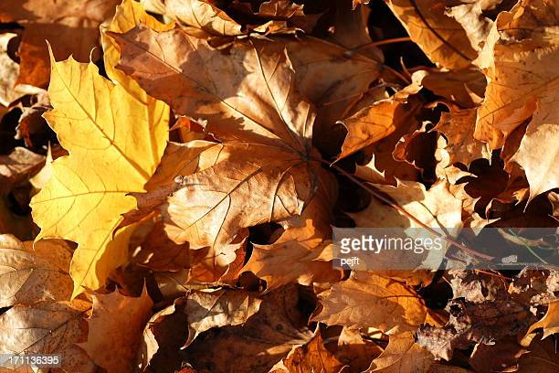 autumn leaves - pejft stock pictures, royalty-free photos & images