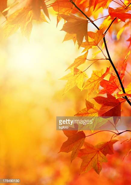 autumn leaves - autumn falls stock pictures, royalty-free photos & images