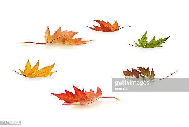 foglie d'autunno - foglia di acero foto e immagini stock