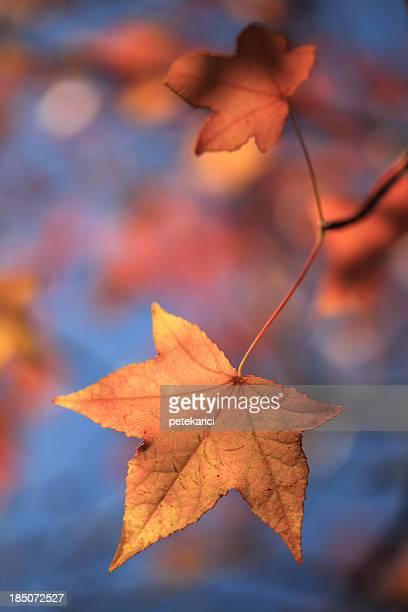 folhas de outono - novembro azul - fotografias e filmes do acervo