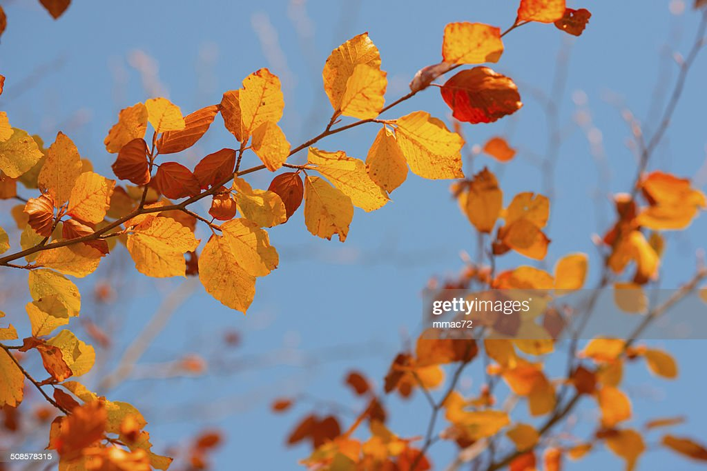 Autumn Leaves : Stock Photo