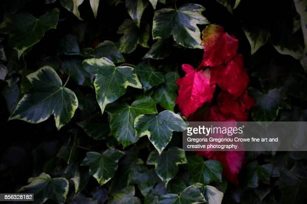 autumn leaves - gregoria gregoriou crowe fine art and creative photography stockfoto's en -beelden