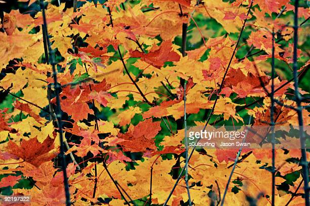 autumn leaves - s0ulsurfing stock pictures, royalty-free photos & images