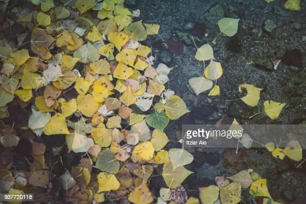 autumn leaves - octubre fotografías e imágenes de stock