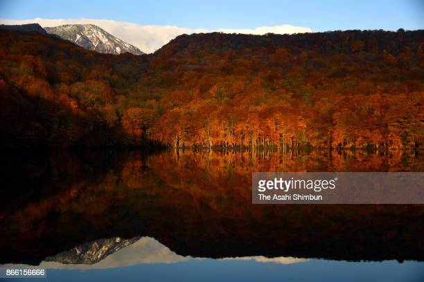 Autumn leaves reflect on the surface of Tsutanuma Pond on October 24 2017 in Towada Aomori Japan