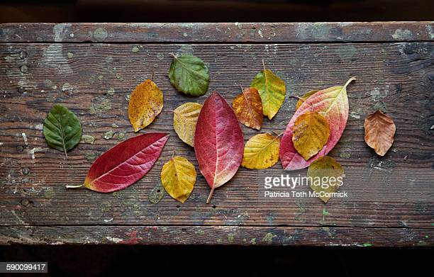 Autumn leaves scattered on rustic wooden tabletop