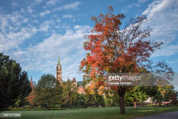 Autumn leaves surrounding Canada's Peace Tower and Parliament Buildings under a blue sky