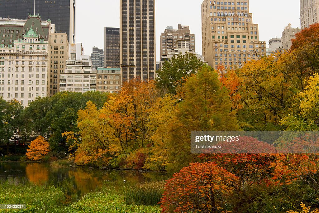 Autumn leaves surrounding the pond at Central Park : Stock Photo