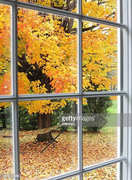 Autumn Leaves Through Back Yard Bay Window