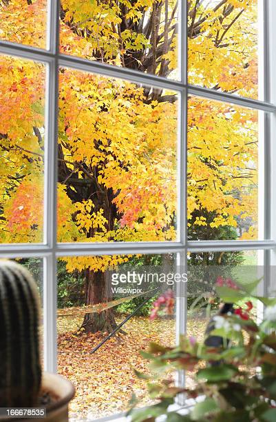 Autumn Leaves Through Bay Window Beyond Potted Plants