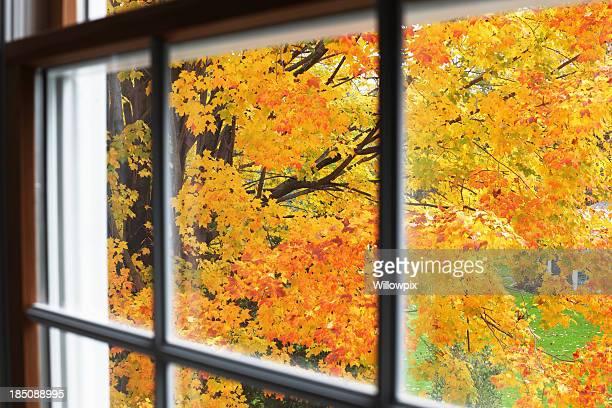 Autunno foglie fino al piano superiore della finestra