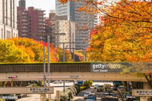 Autumn leaves trees stand along both side of street among Shinjuku Subcenter buildings at Nishi-Shinjuku, Tokyo Japan on November 24 2017. City traffic goes through under the elevated walkway.