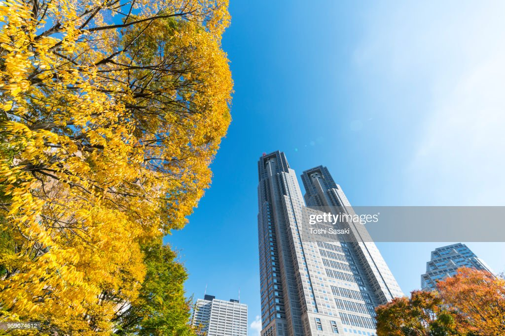 Autumn leaves trees stand around The Tokyo Metropolitan Government Building and other high-rise buildings at Shinjuku Subcenter Nishi-Shinjuku, Tokyo Japan on November 24 2017. : Stock-Foto
