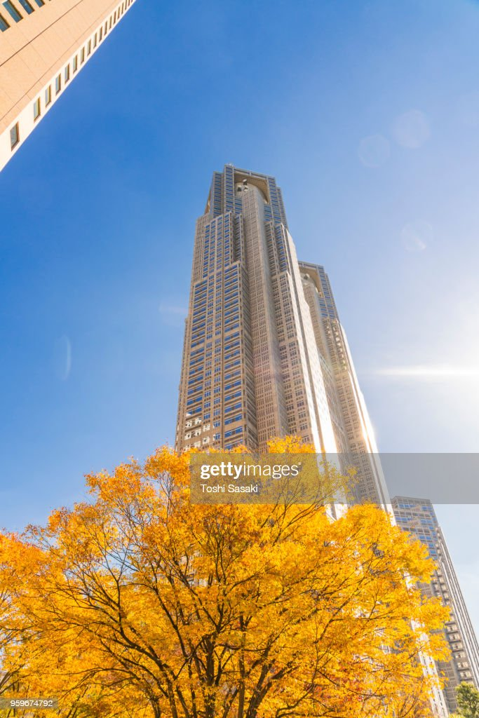 Autumn leaves trees stand at front of The Tokyo Metropolitan Government Building and other high-rise buildings at Shinjuku Subcenter Nishi-Shinjuku, Tokyo Japan on November 24 2017. : Stock-Foto