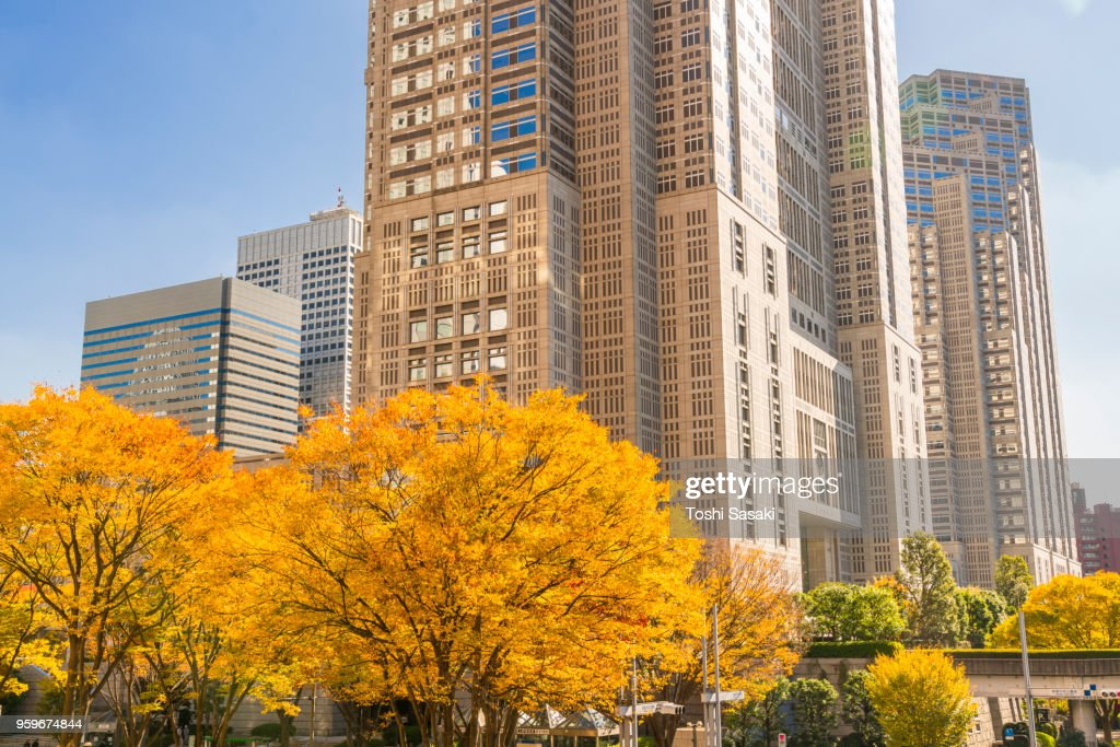 Autumn leaves trees stand at front of The Tokyo Metropolitan Government Building and other high-rise buildings at Shinjuku Subcenter Nishi-Shinjuku, Tokyo Japan on November 24 2017. : Stock Photo
