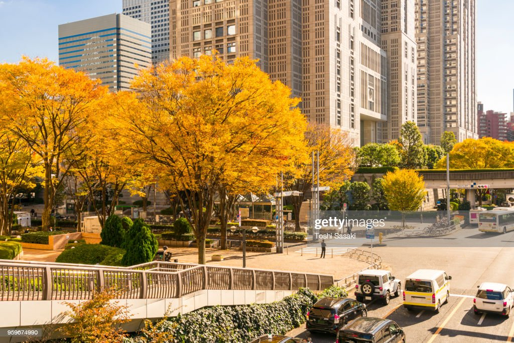 Autumn leaves trees stand at the corner of the Tokyo Metropolitan Government Building intersection and other high-rise buildings at Shinjuku Subcenter Nishi-Shinjuku, Tokyo Japan on November 24 2017. : Stock-Foto