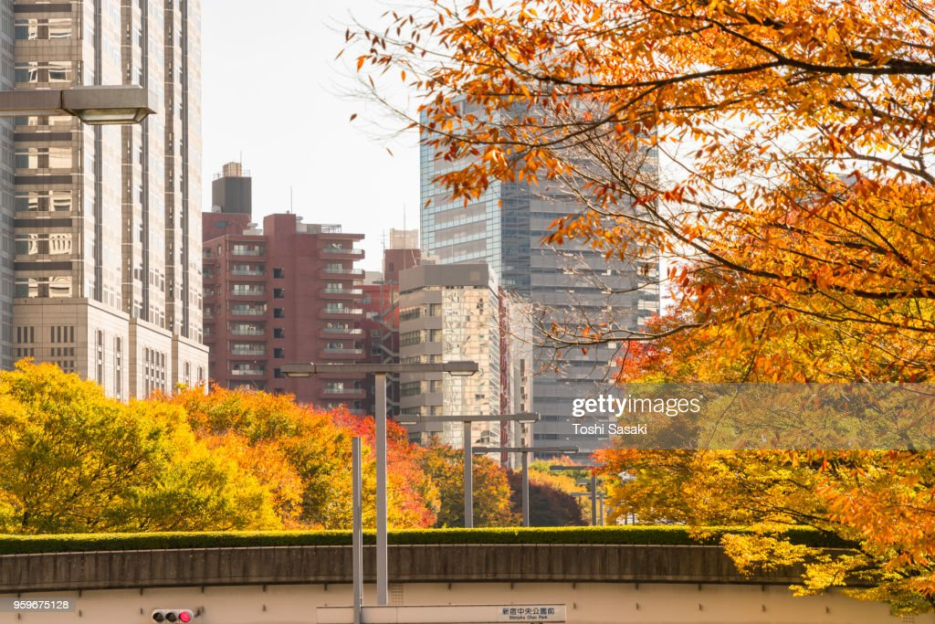 Autumn leaves trees stand behind elevated walkway along both side of street among Shinjuku Subcenter buildings at Nishi-Shinjuku, Tokyo Japan on November 24 2017. City traffic goes through under the elevated walkway. : Stock-Foto