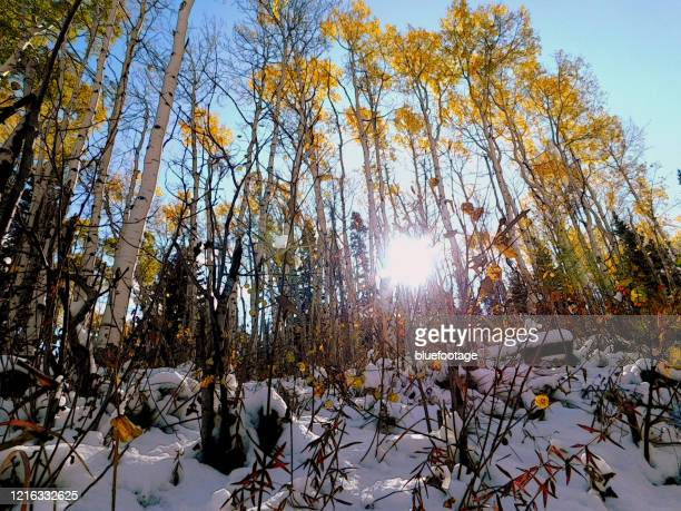 autumn, leaves turning color - bluefootage stock pictures, royalty-free photos & images