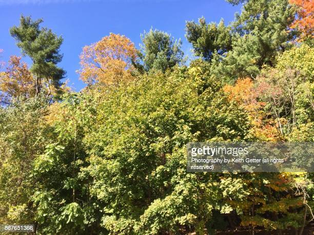Autumn leaves turning colors under a blue sky
