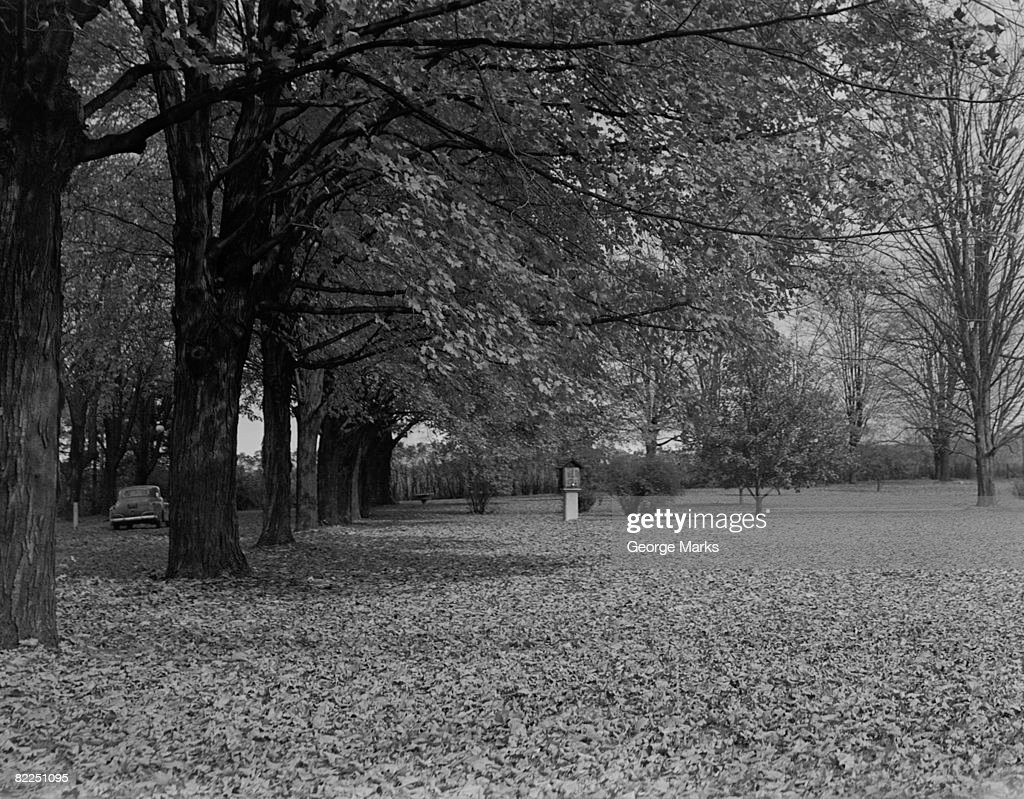 Autumn leaves under trees in park : Stock Photo