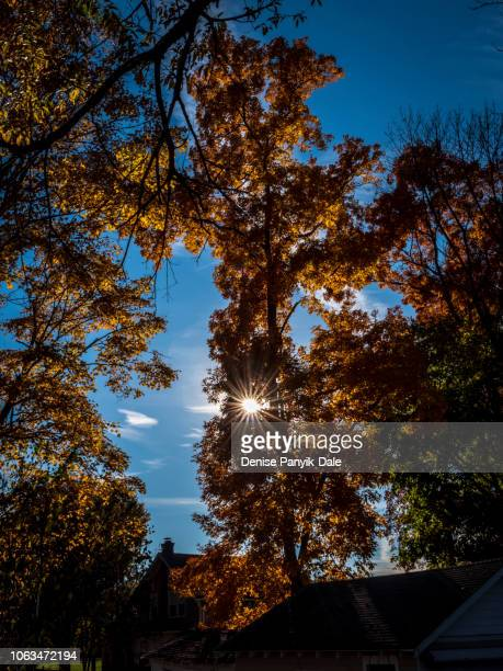 autumn leaves with sunburst - panyik-dale stock photos and pictures
