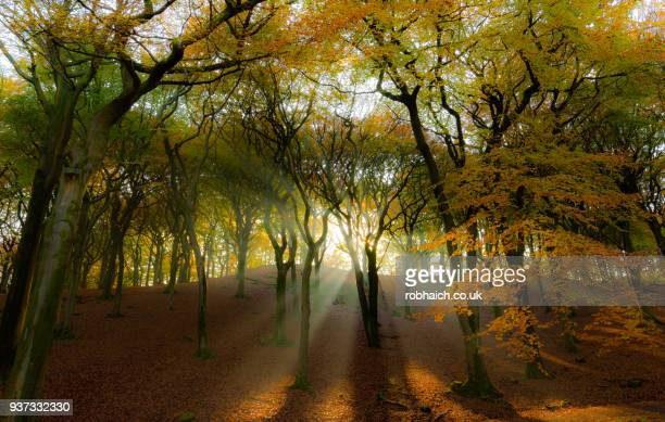 autumn light in the woods - lancashire stock pictures, royalty-free photos & images